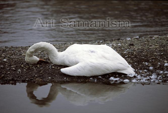 Artsasamah70
