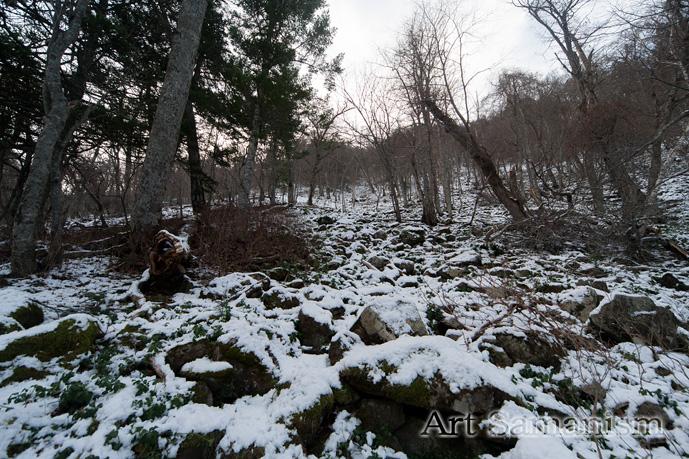 Artsato111_006